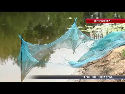 На Сумщині у річку випустили рибу, яка занесена до Червоної книги України