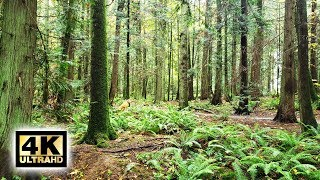 4K Virtual Nature Trail Hike In Horth Hill North Saanich, BC - No Music (2020)