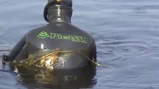Подводная охота. Нырнём -- тут не глубоко