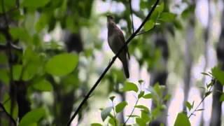 Стих о природе - Ольга Короленко