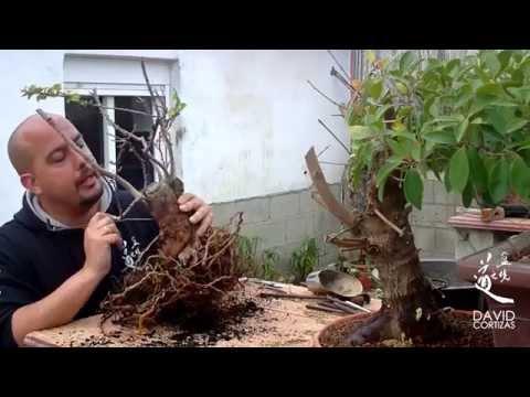 El jardinero en casa la buganvilla doovi - El jardinero en casa ...