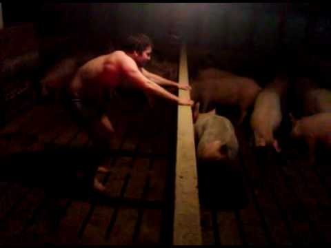 Man vs. Pigs