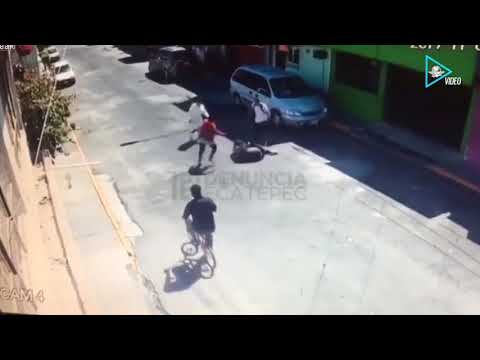 Pitbull is attacking a woman on the street 2017