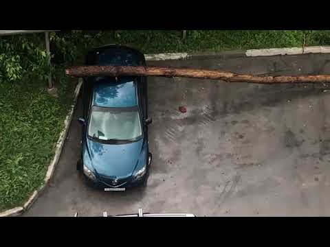 Дерево пробило автомобиль во время шторма в микрорайоне Молодежном Бердска