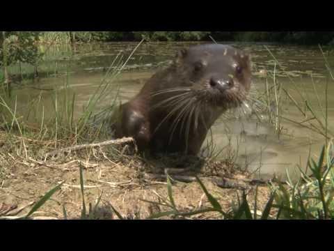 British Wildlife Centre; Discover Britain's Wonderful Wildlife