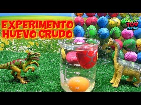 30 MINUTOS EXPERIMENTOS CASEROS huevo de dinosaurio en huevo crudo y otros nacimientos de dinosaurio
