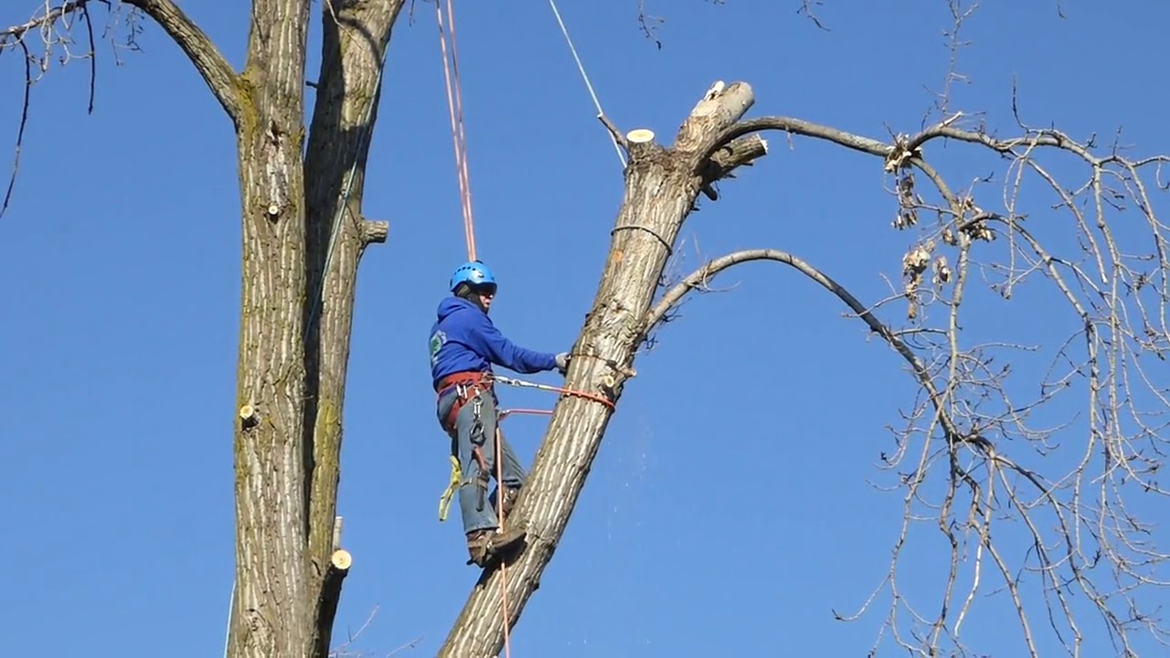Tree Trimming from Kustom Tree Care Inc