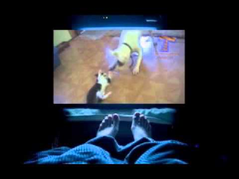 Dogs and cats meeting for the first time   Cute and funny dog & cat compilation