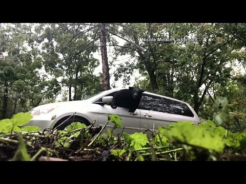 شاهد: دب يكسر زجاج سيارة ويخرج منها أمام عين مالكها  - نشر قبل 2 ساعة