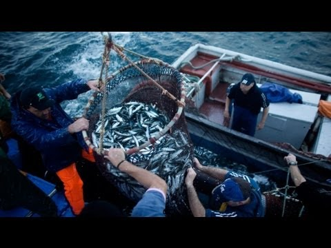 Euronews The Network - Overfishing: Can The EU Influence Change?