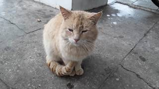 Кормление рыжего кота