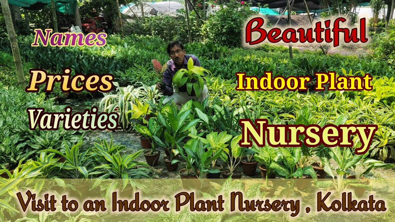 Indoor Plant Nursery Names And Prices
