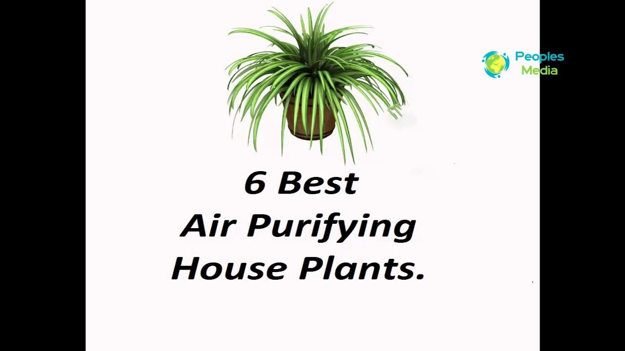 house plants 6 best air purifying house plants peoples media youtube. Black Bedroom Furniture Sets. Home Design Ideas