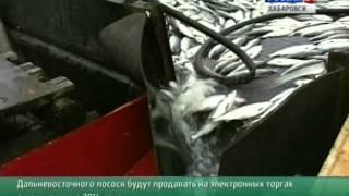 Вести-Хабаровск. Рыбные электронные торги(, 2014-05-16T04:57:57.000Z)