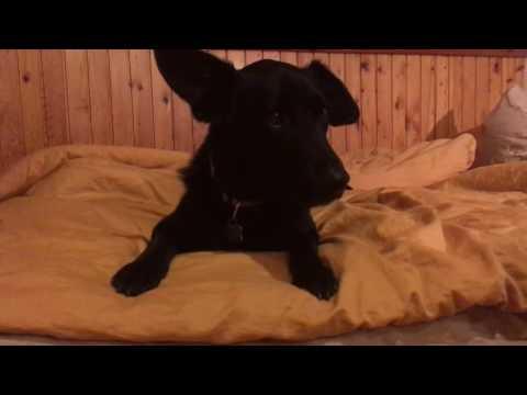 Nala the dog doesn't like singing