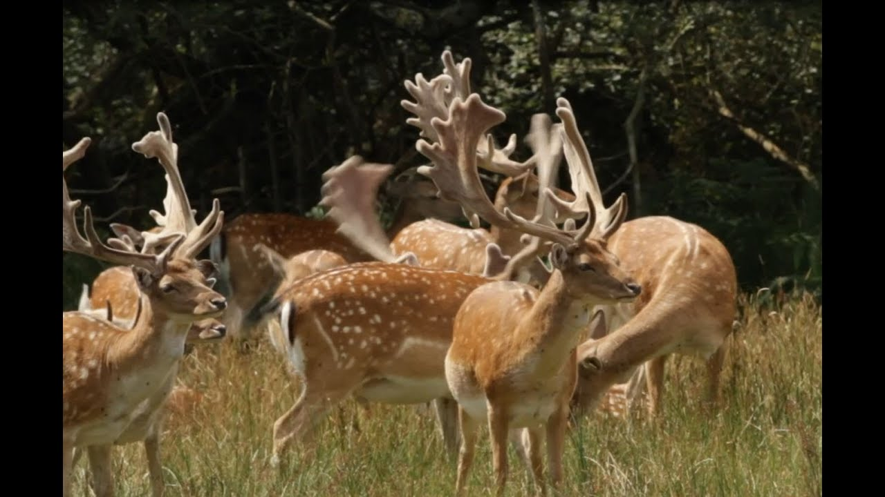 Image result for The New Forest National Park