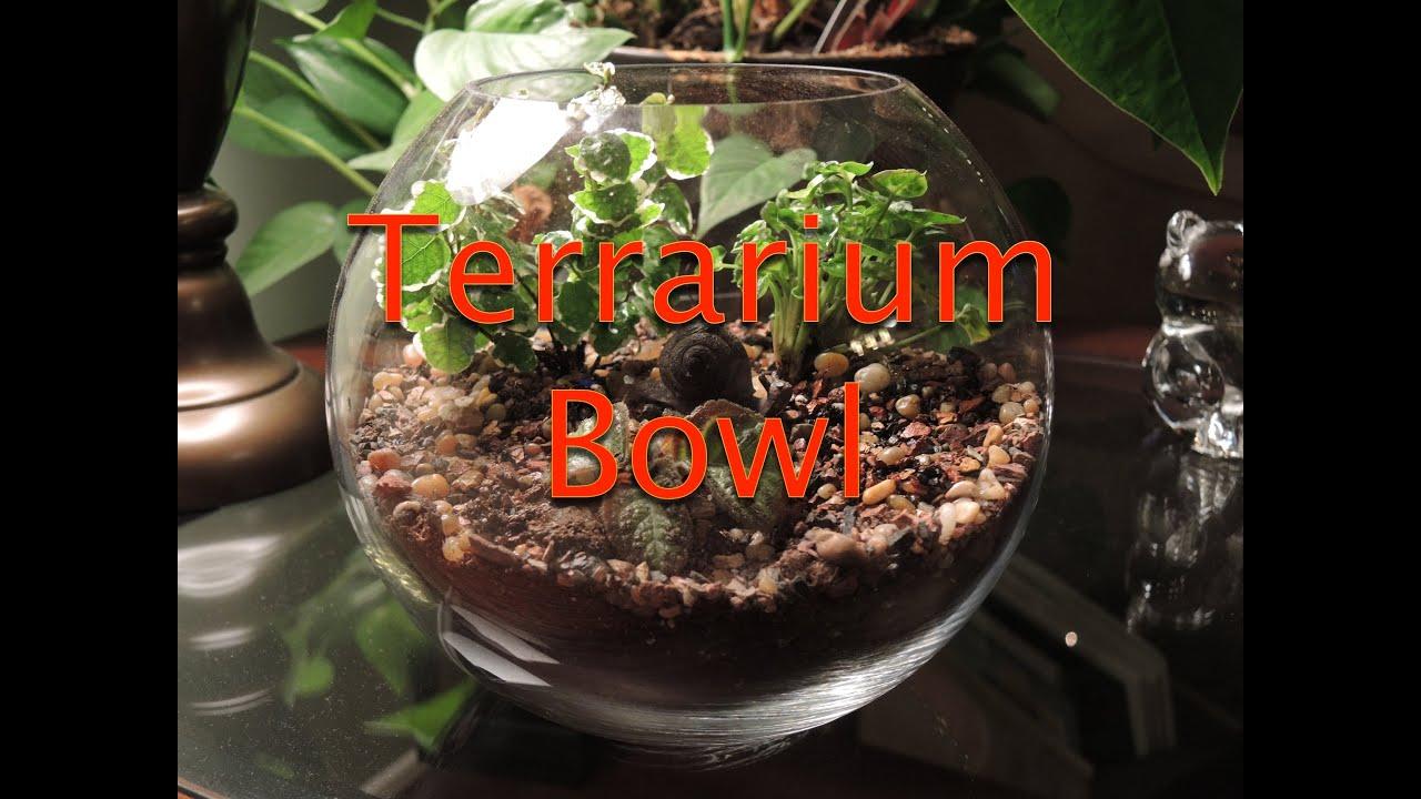 Creating A Glass Bowl Terrarium Youtube