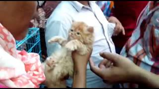 ANIMAL #DOG #CAT IN CHEAP PRICE IN MUMBAI