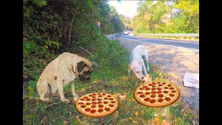 Feeding Homeless Dogs With Pizza And Chicken  Animals Hero