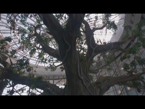 غابة استوائية في قلب دبي
