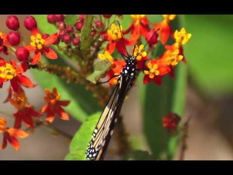 FLOWER POWER HD 1080p