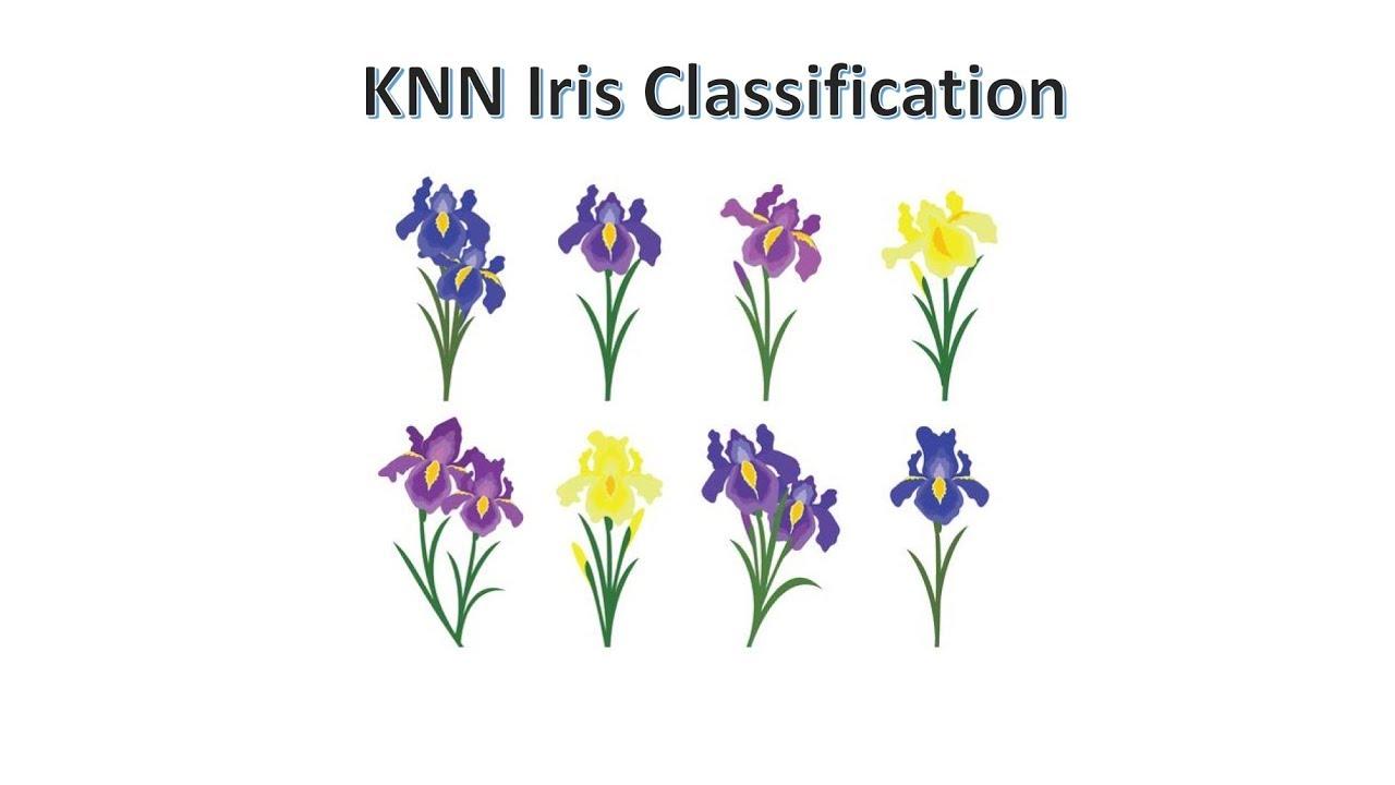 Knn Classification Of Iris Flower Dataset Using Scikit Learn