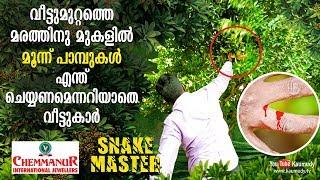 Three snakes on the Courtyard Tree shocks family | Vava Suresh | Snakemaster | EP 391
