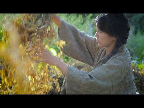 陸綜-李子柒 Liziqi -EP 006-那…只有豌豆的一生了!
