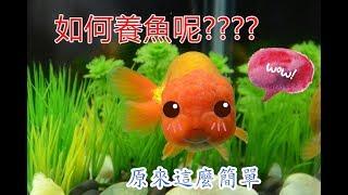 【教你最簡單便宜的方式養魚】用正確的方式 怎麼樣都養不死!!!!     花姬兄弟