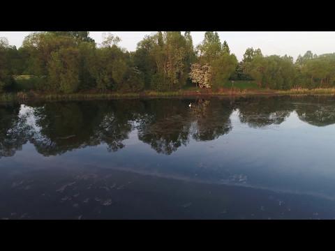 Swans and Lakesides - DJI Phantom 4pro flight in 4K