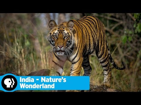 INDIA - NATURE'S WONDERLAND | Official Trailer | PBS