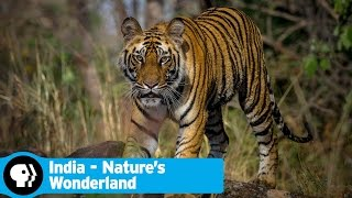 INDIA - NATURES WONDERLAND | Official Trailer | PBS