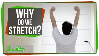 Why Do We Stretch in the Morning? by : SciShow