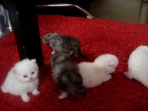 Koty Perskie Youtube