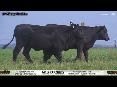 LOTE 083