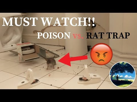 Rat's Ultimate Demise! Meets Poison And Rat Traps! MUST WATCH!!
