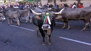 Madrid a revécu sa transhumance