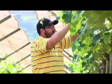 vídeo Programa de Incentivo ao Produtor Rural, chama a atenção em Louveira