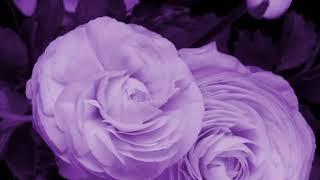 Как распускаются цветы Красивое видео