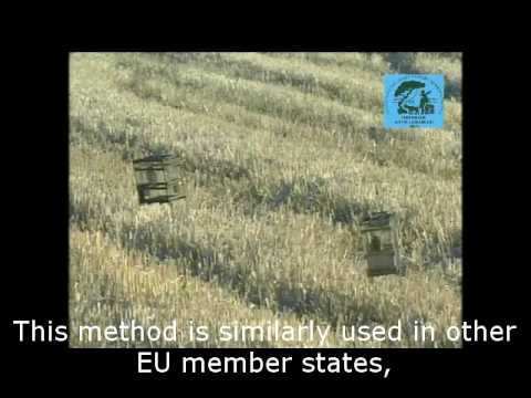 Trapping in EU Member States