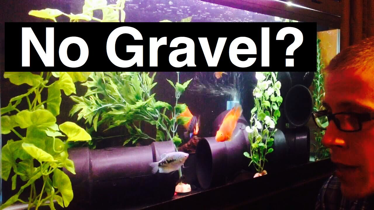 Fish aquarium with plants - No Gravel Aquarium Or No Substrate In Fish Tank