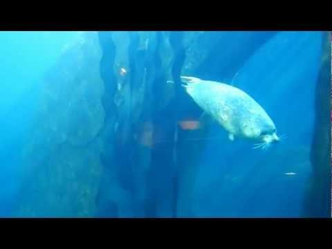 Seward, Alaska aquarium - harbor seal