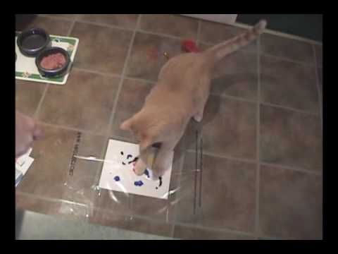 Cat And Dog Paw Prints How To Tell The Difference Between
