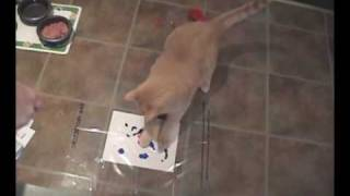 Cats Painting Artwork with Kitty Casso Paint Kit