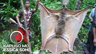 Kapuso Mo, Jessica Soho: Aswang nga ba ang nilalang na ito. Latest episode latest parody