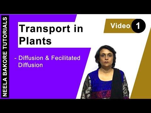 Transport in Plants - Diffusion & Fecilitated Diffusion