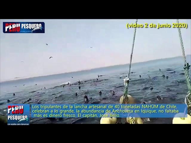 Pesca 2020: Norte Chile capturó 112 mil toneladas de Anchoveta y Sur de Perú