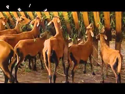 Profile: Livestock