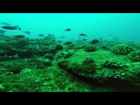 "MWD spearfishing hawaii ""molokai Trip"""