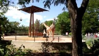 Zoo porn ;)